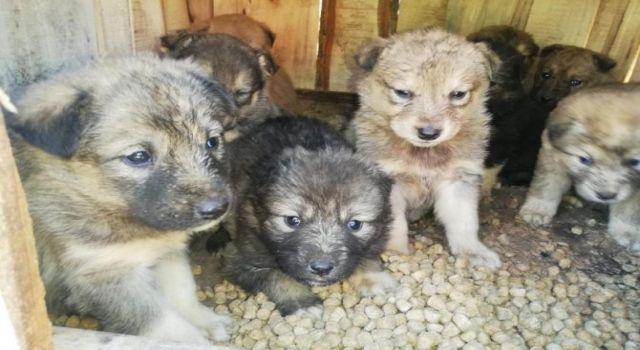 12 yavru köpek koruma altına alındı