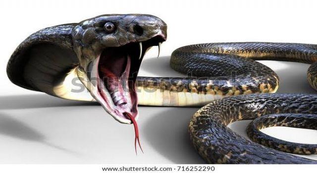 Eşini 'kiralık kobrayla' öldürdü