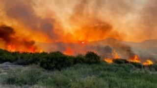 Türkiye'deki orman yangınları The Guardian'da: Hükümete öfke büyüyor