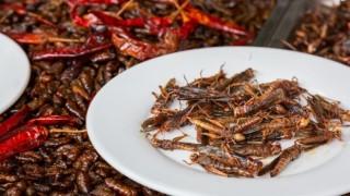 Yenilebilir böcekler yakında süpermarketlerde!